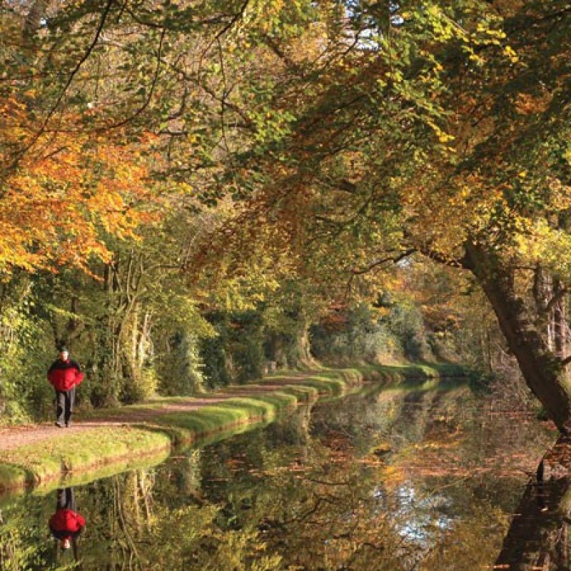Brecon Canal with trees and walker